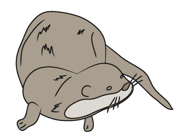 Otter clipart #2, Download drawings