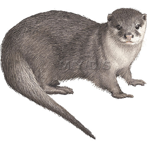 Otter clipart #6, Download drawings