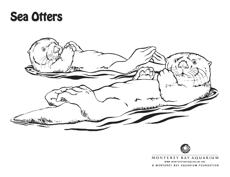 Otter coloring #10, Download drawings