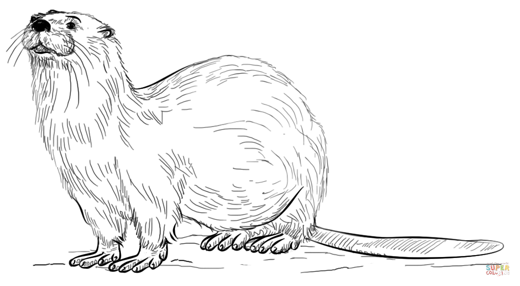 The Otter Coloring Download The Otter Coloring For Free 2019