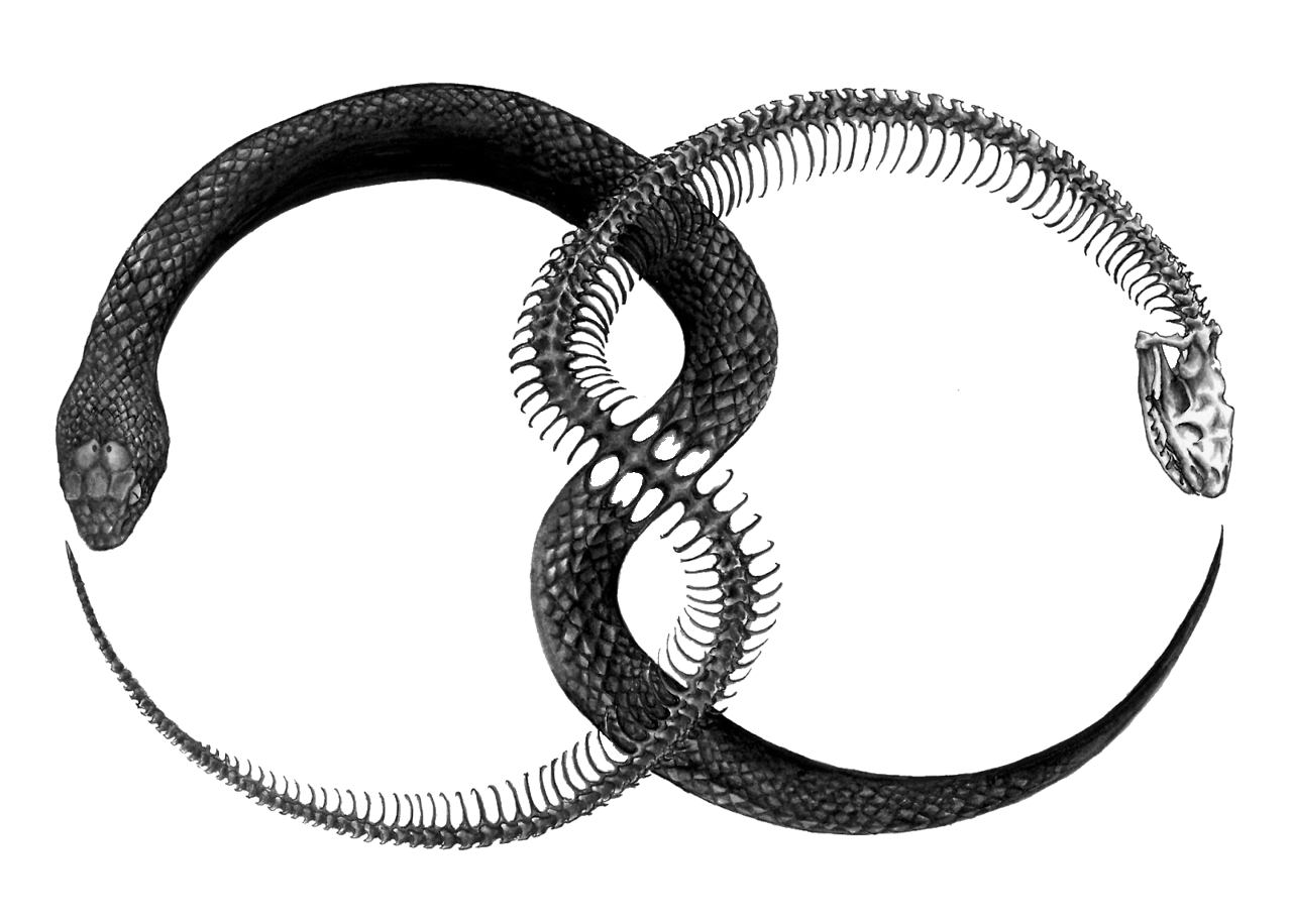 Ouroboros clipart #1, Download drawings