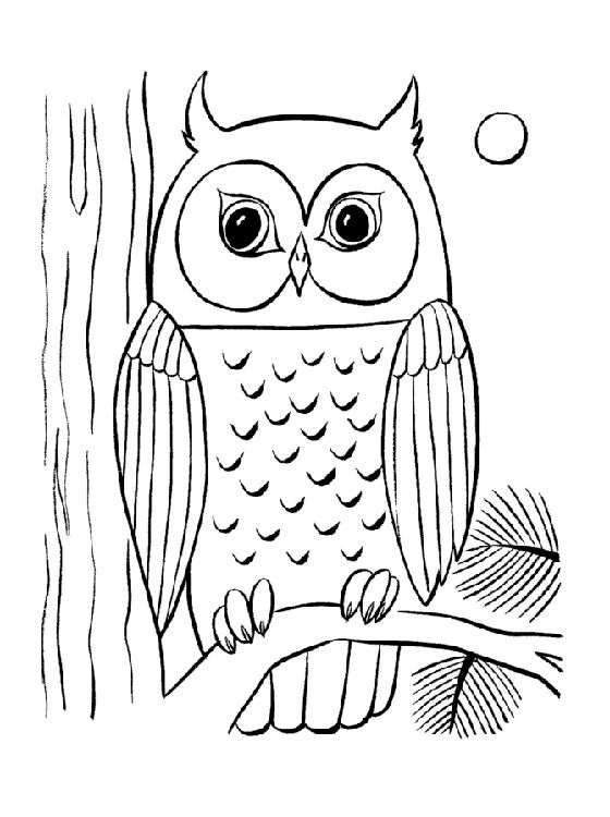 Owl coloring #10, Download drawings