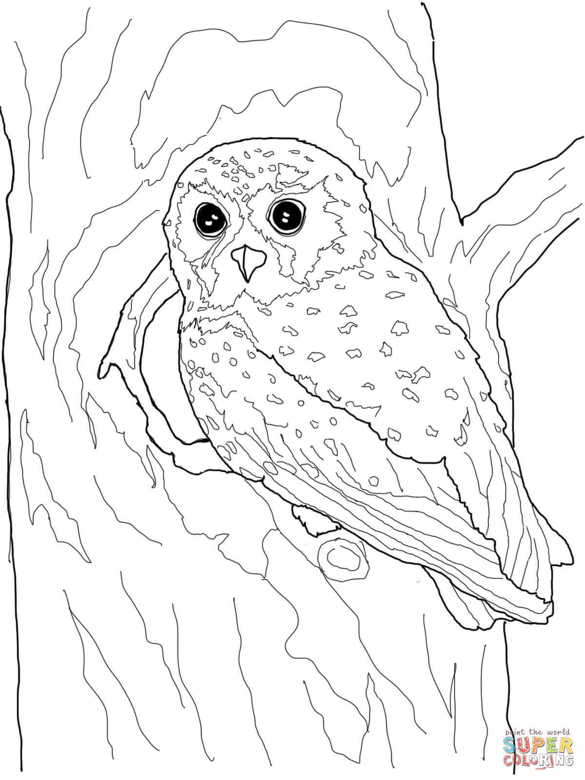 Owl coloring #8, Download drawings