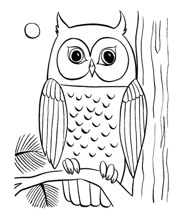 Owl coloring #2, Download drawings