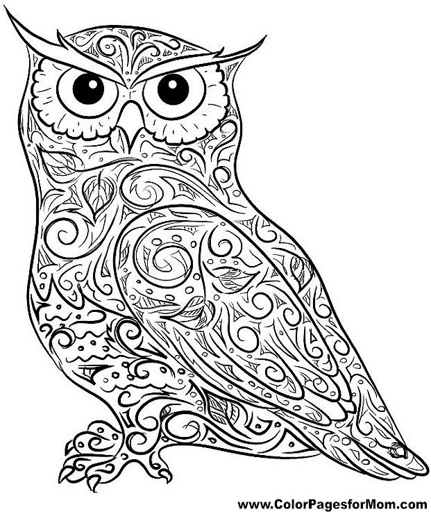 Owlet coloring #12, Download drawings
