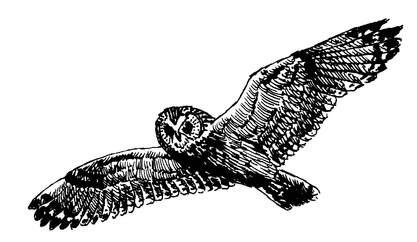 Owlfly clipart #4, Download drawings