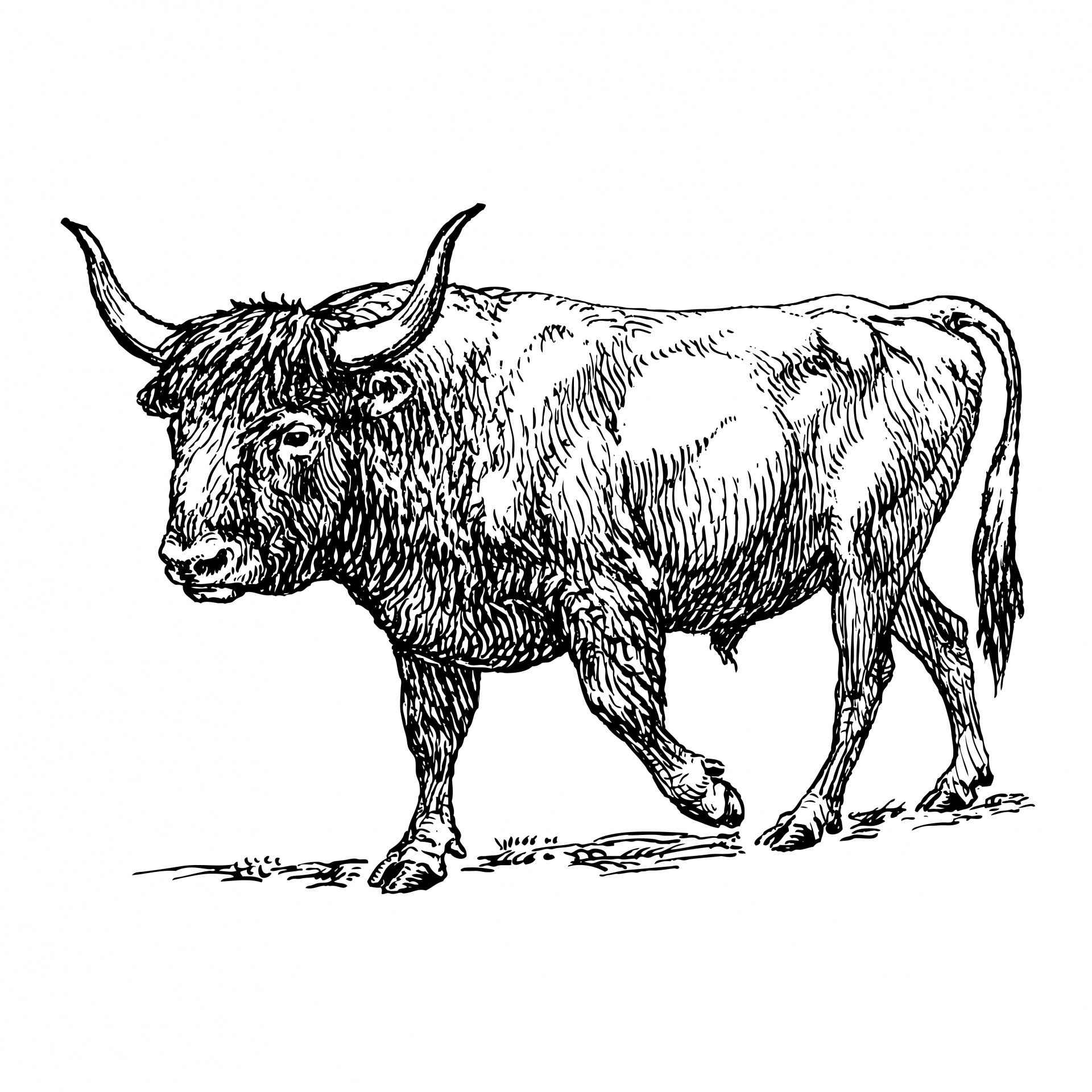 Ox clipart #15, Download drawings