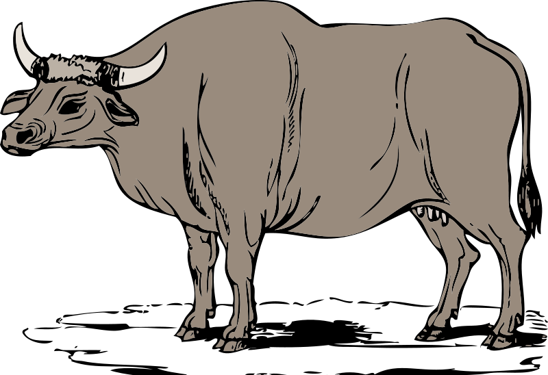 Ox clipart #2, Download drawings