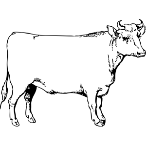 Ox clipart #17, Download drawings