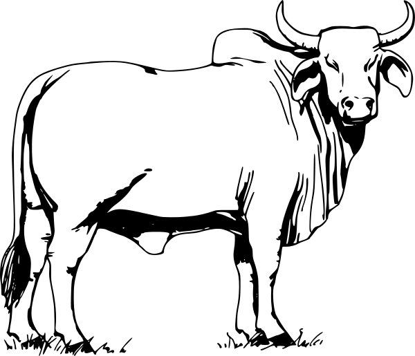 Ox clipart #8, Download drawings