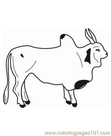 Ox coloring #5, Download drawings