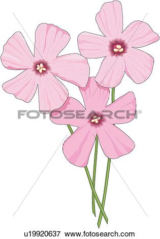 Oxalis clipart #14, Download drawings