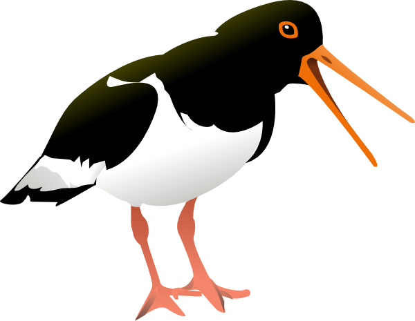 Oystercatcher clipart #20, Download drawings