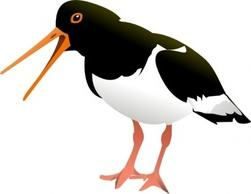 Oyster Catchers clipart #6, Download drawings