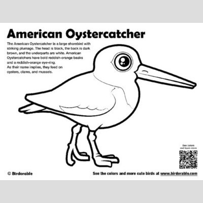 Oystercatcher coloring #20, Download drawings