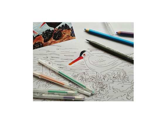 Oyster Catchers coloring #10, Download drawings