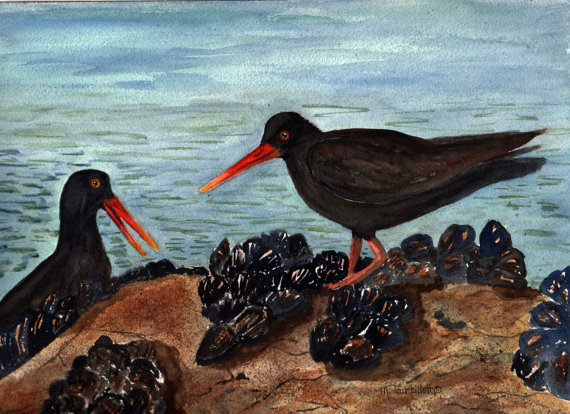 Oyster Catchers coloring #7, Download drawings