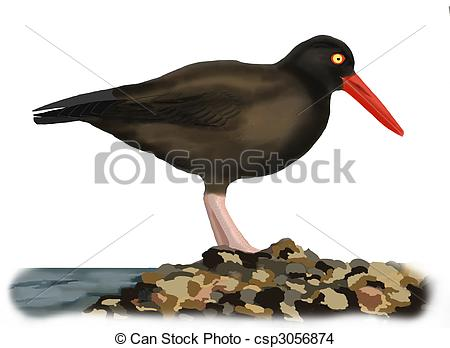 Oystercatcher clipart #18, Download drawings