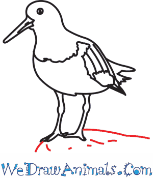 Oystercatcher coloring #13, Download drawings