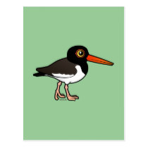 Oystercatcher coloring #17, Download drawings
