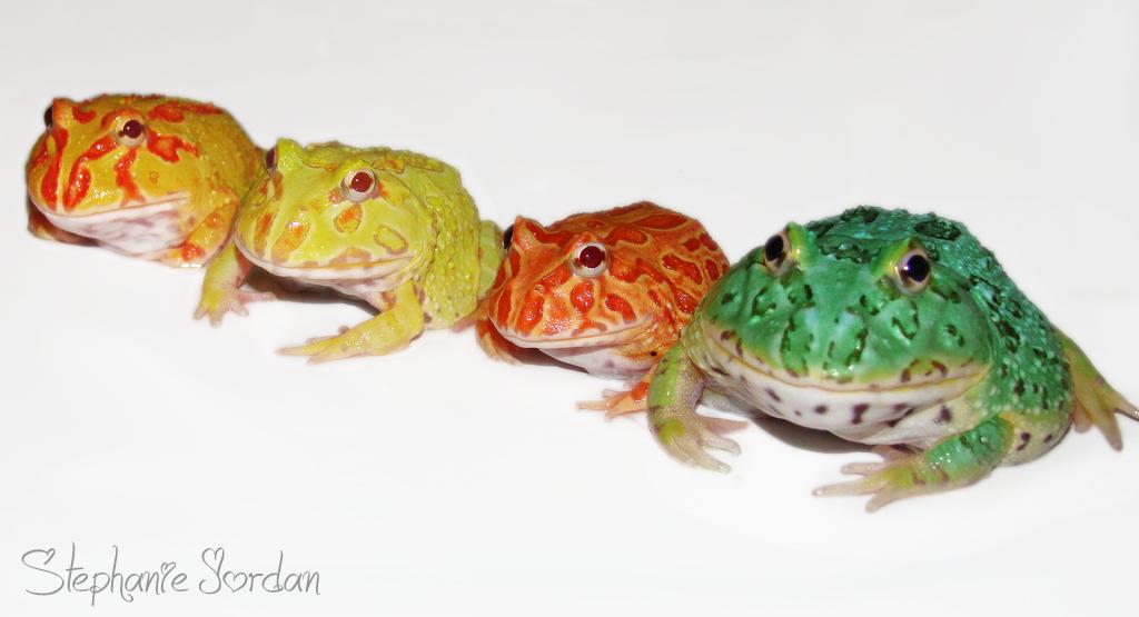 Pac-man Frog coloring #19, Download drawings