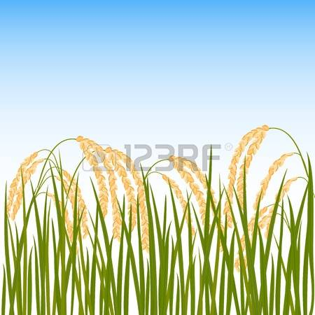 Paddy Field clipart #7, Download drawings