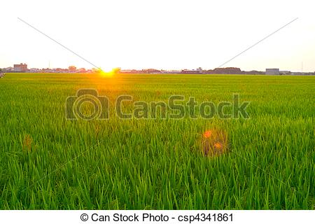 Paddy Field clipart #11, Download drawings