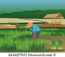 Paddy Field clipart #12, Download drawings