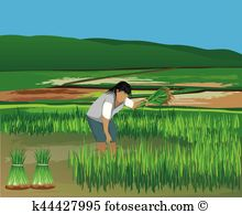 Paddy Field clipart #8, Download drawings