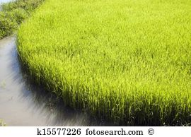 Paddy Field clipart #3, Download drawings