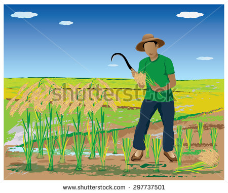 Paddy Field clipart #15, Download drawings