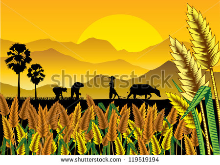 Paddy Field clipart #16, Download drawings