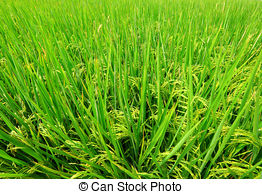 Paddy Field clipart #10, Download drawings