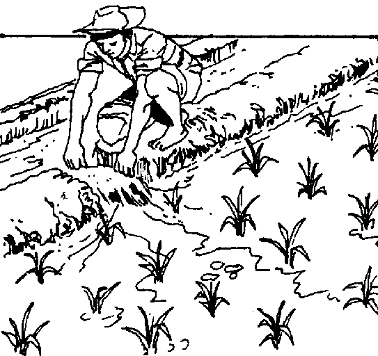 Paddy Field coloring #7, Download drawings