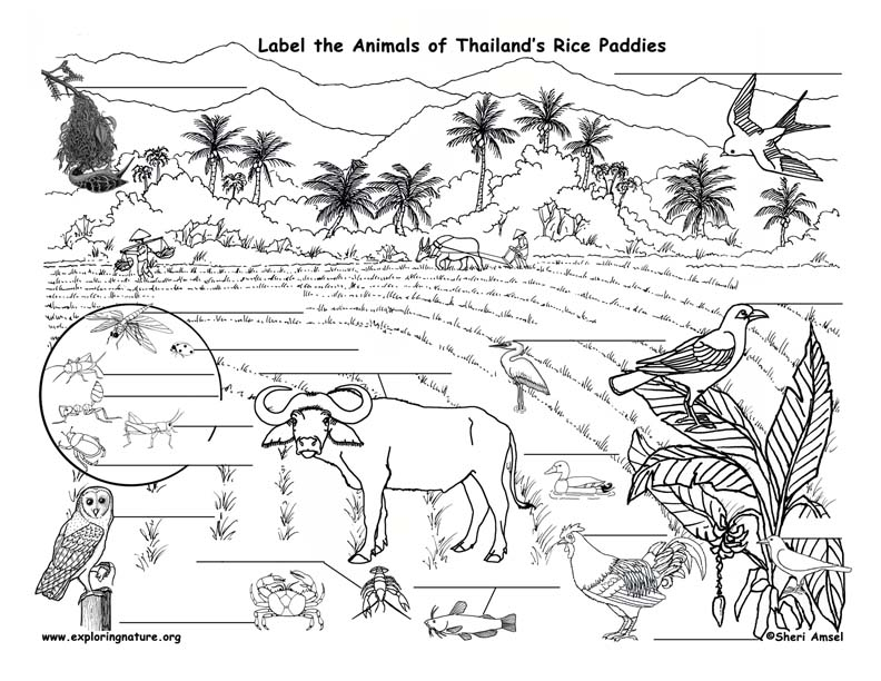 Paddy Field coloring #19, Download drawings