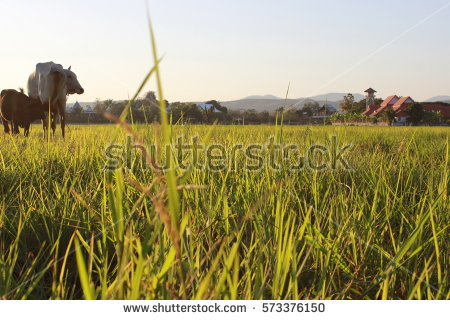 Paddy Field svg #15, Download drawings