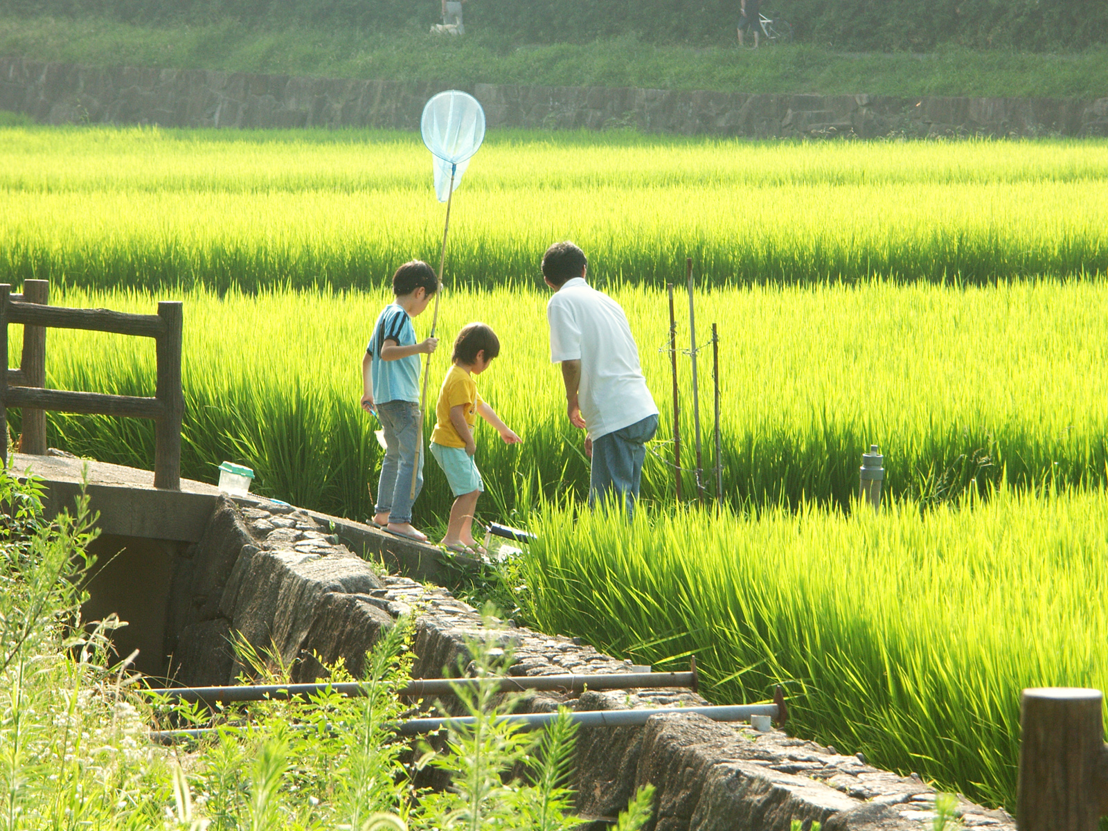 Paddy Field svg #9, Download drawings