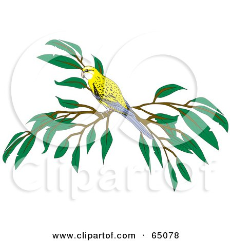 Pale-headed Rosella clipart #1, Download drawings