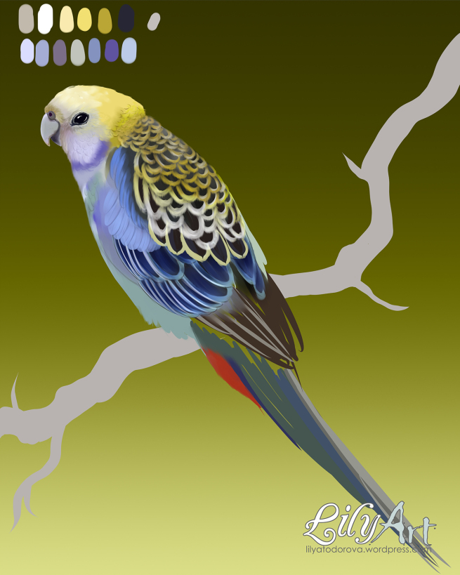Pale-headed Rosella clipart #4, Download drawings