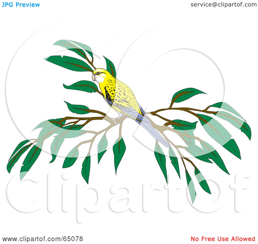 Pale-headed Rosella clipart #17, Download drawings