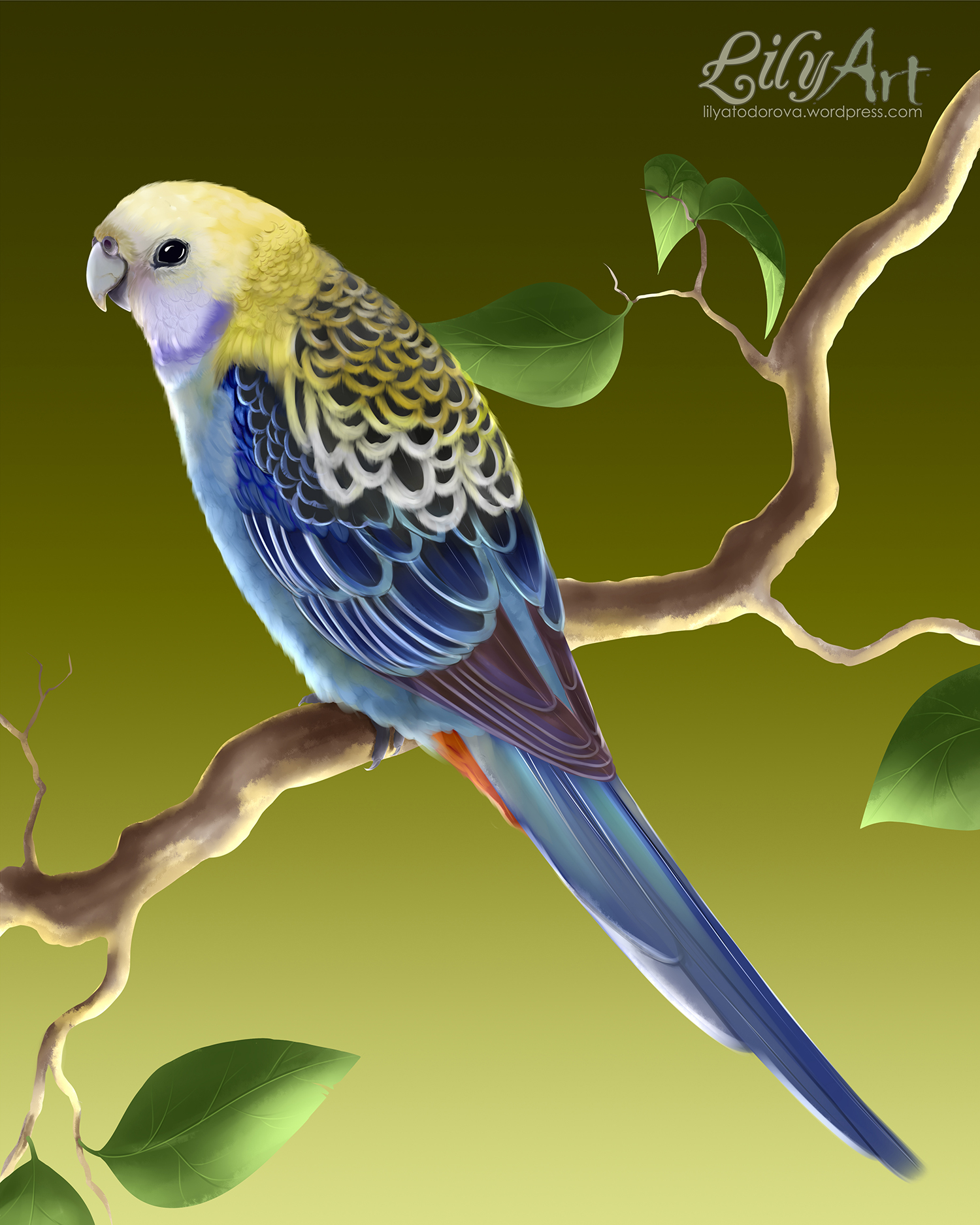 Pale-headed Rosella clipart #14, Download drawings