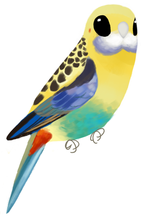 Pale-headed Rosella clipart #10, Download drawings