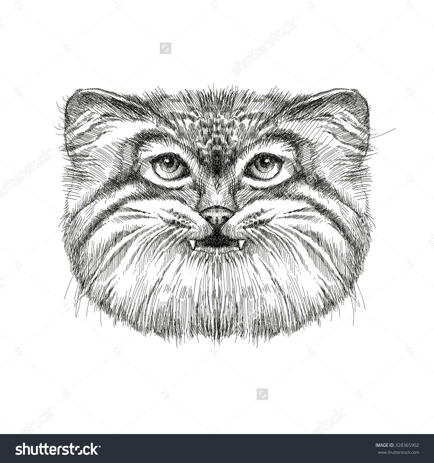 Palla's Cat clipart #16, Download drawings