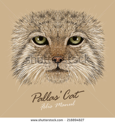 Palla's Cat clipart #15, Download drawings