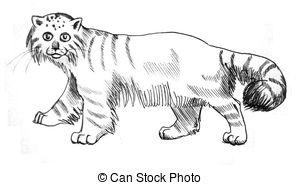 Pallas's Cat clipart #2, Download drawings