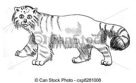 Pallas's Cat clipart #5, Download drawings