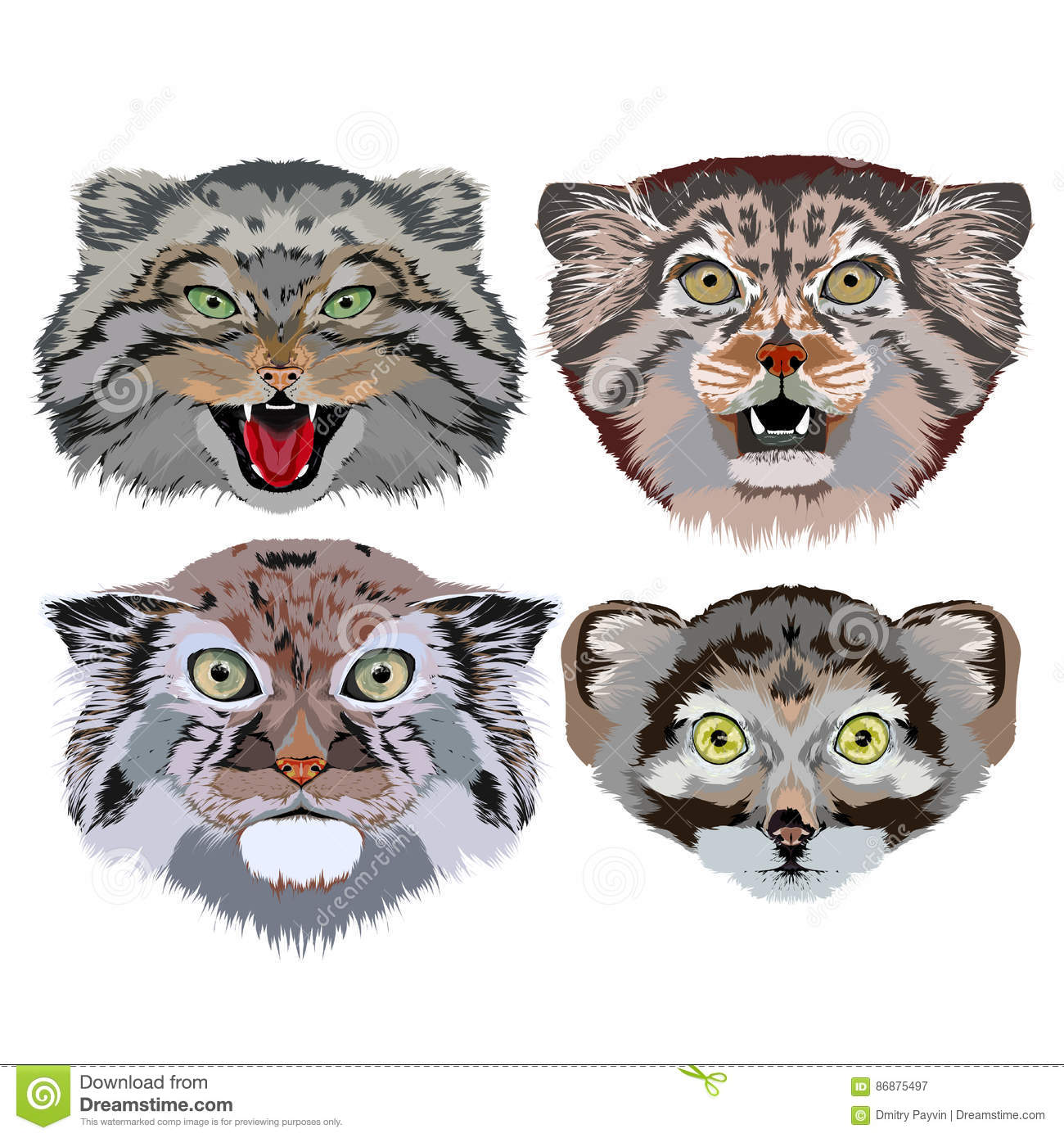 Pallas's Cat clipart #13, Download drawings