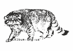 Pallas's Cat clipart #15, Download drawings