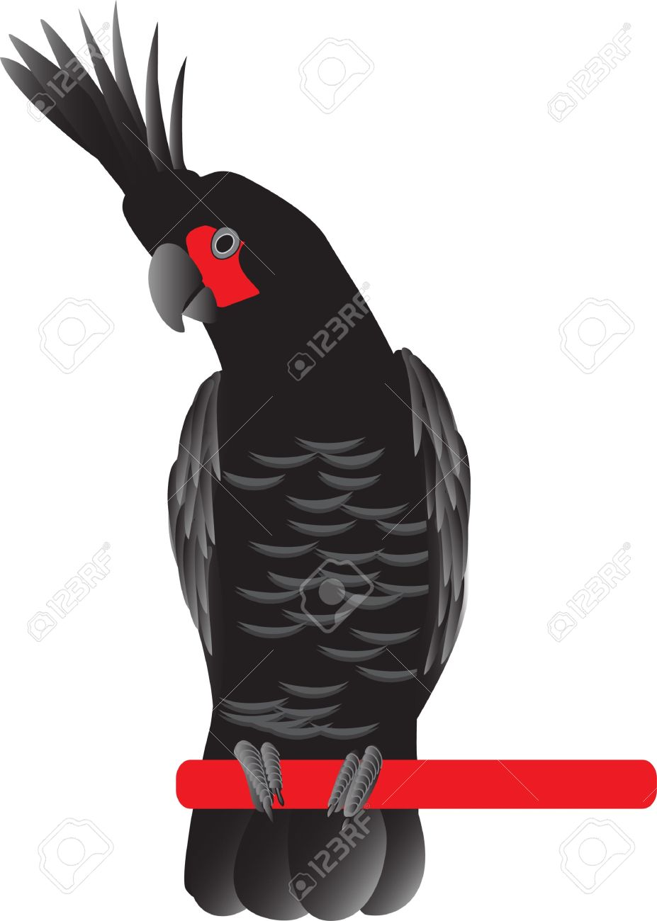 Palm Cockatoo clipart #1, Download drawings