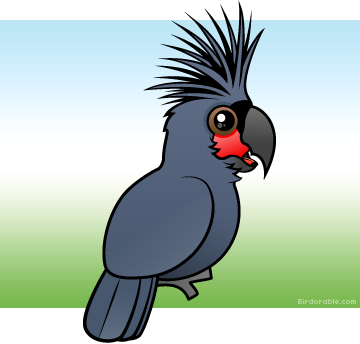 Palm Cockatoo clipart #2, Download drawings
